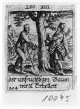 Küsel J. C.-Küsel M. M. (1688-1700), Maledizione del fico sterile