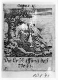Küsel J. C.-Küsel M. M. (1688-1700), Creazione di Eva